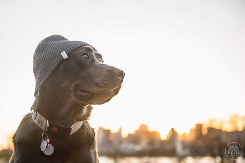 Happy dog walking with hat