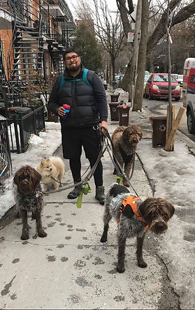 wiggle dog walker Rodrigo dog walker