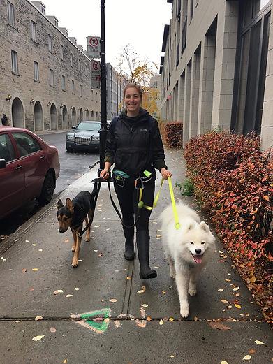 Sandryne dog walker