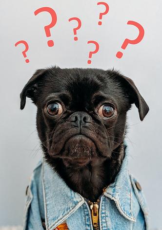 dog FAQ 1 pink.png