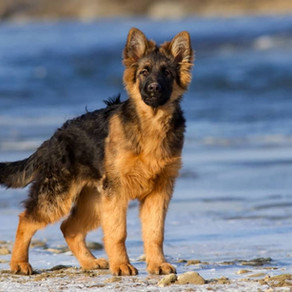 All You Need To Know About Double Coat Dogs