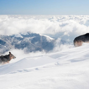 Can a German Shepherd Live in Extreme Climates?