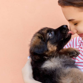 11 Common Health Problems for German Shepherds