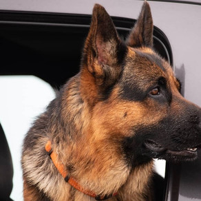 RV Travel With a Dog? 10 Things to Keep in Mind