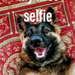 30 Totally Relatable German Shepherd Memes