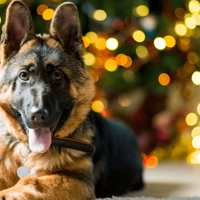 11 Holiday Foods that are Toxic for your Dog