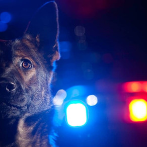 How to Train Your Dog Like Law Enforcement