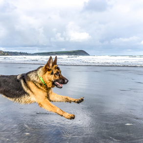 Zoomies: Has my dog gone crazy?!