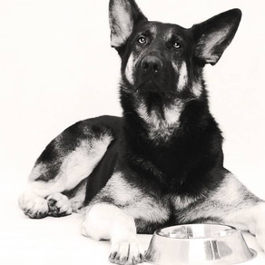 Why Should You Consider a Raw Food Diet for Dogs?