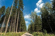 Места для катания на роликах и велосипедах по лесу в Азарово