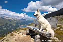 Dog Mountain 1005