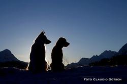 Dog Mountain 1007