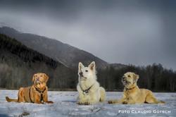 Dog Mountain 1004