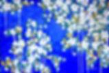 Printemps%202020_edited.jpg