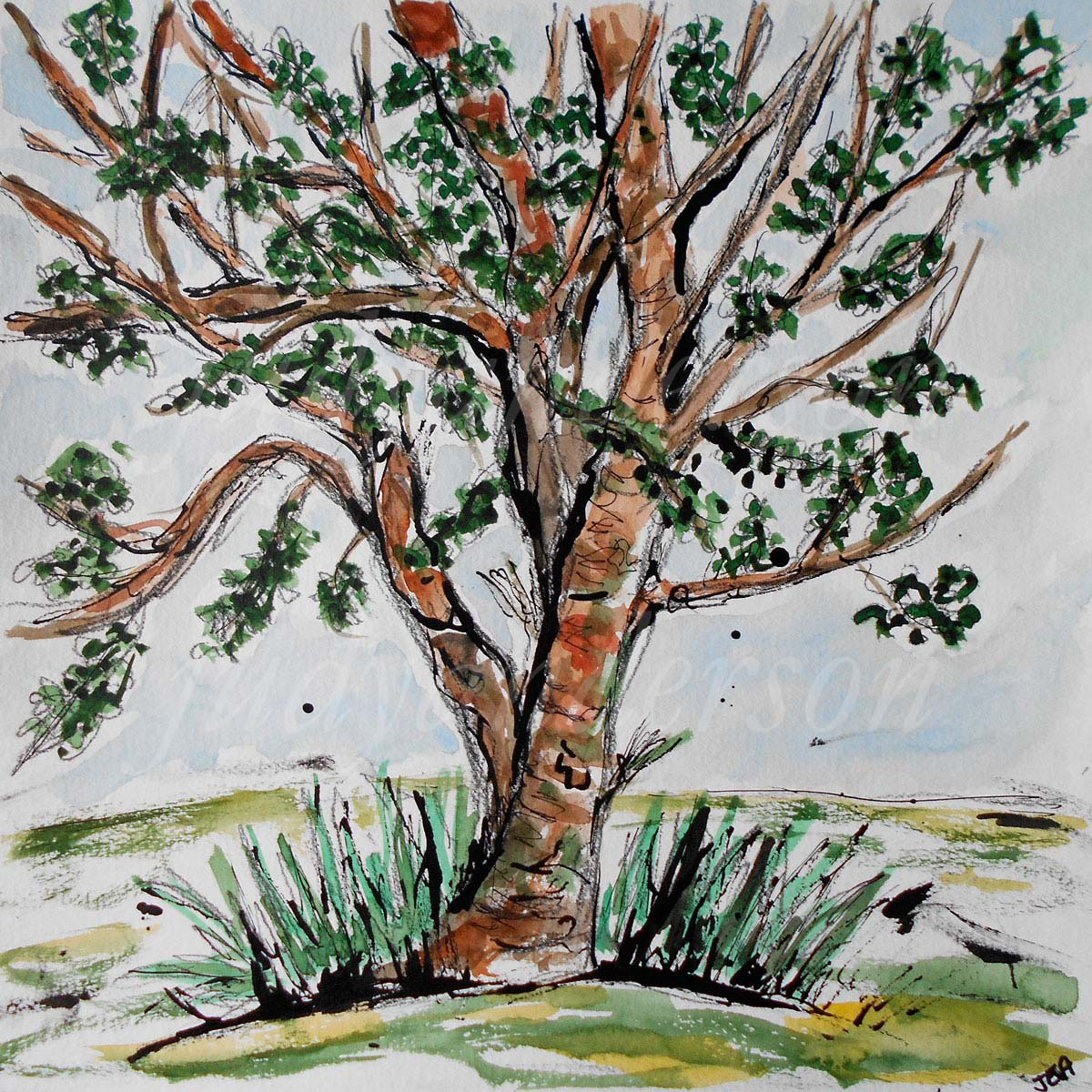 Gnarly Old Cherry Tree, Maryland
