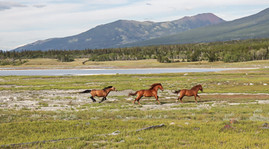 Horses in the Valley by Keith Koepke