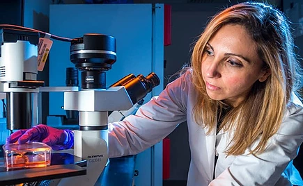 Dr. Irene Ghobrial looking into microscope to study blood cancer