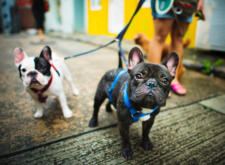 Common questions about dog walking