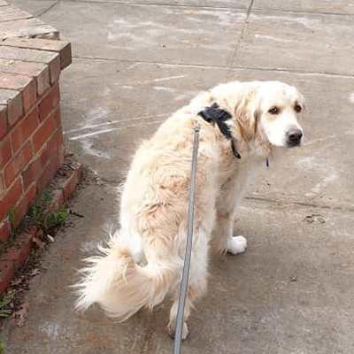 Dog Walking - 30 mins