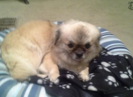How do I find a good pet sitter?