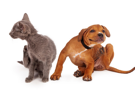 Is your pet suffering from allergies?
