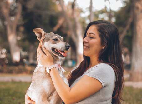 The top 6 ways pets can help boost your mental health