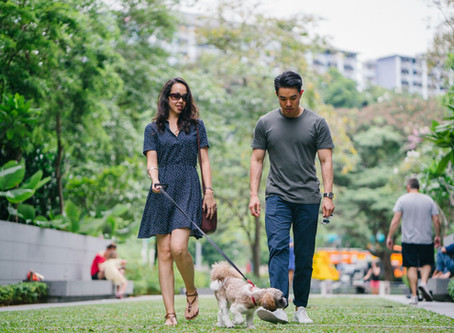 5 Dog Walking Tips to Keep Your Pet Safe in Australia