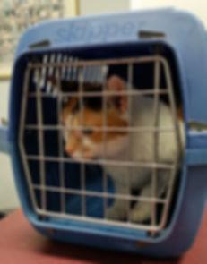Pet Transport Services Glen Iris.jpg