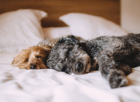 How to prepare your pet for a pet sitter