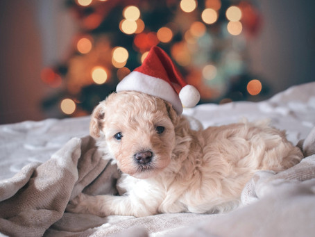 How to keep your dog safe and happy over Christmas