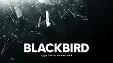 Blackbird_WebImage.png