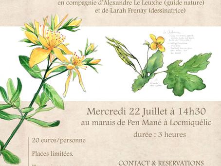 Visite botanique dessinée - 22 juillet 2020 14h30