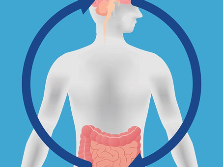 Gut Influences Brain and Behavior