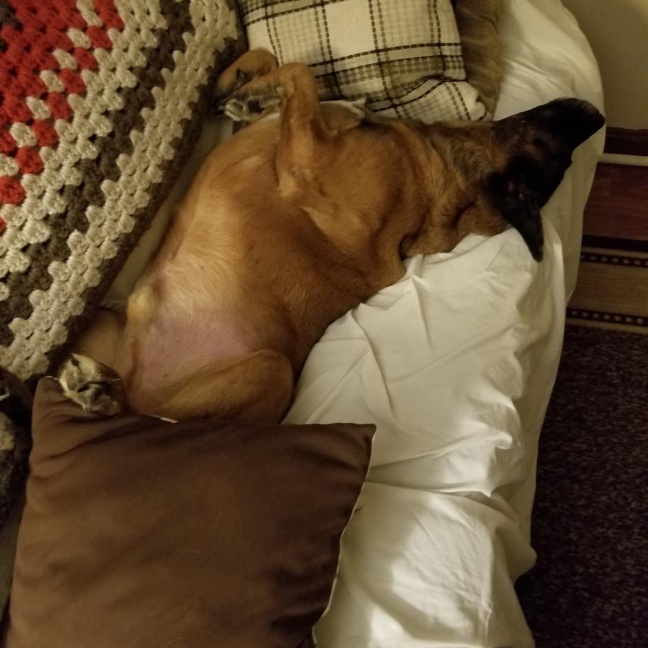 Dreaming Dexter
