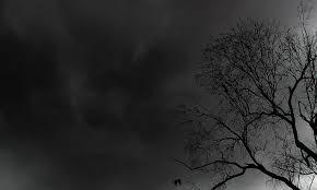 Tree Nature Dark - free photo from Pixabay