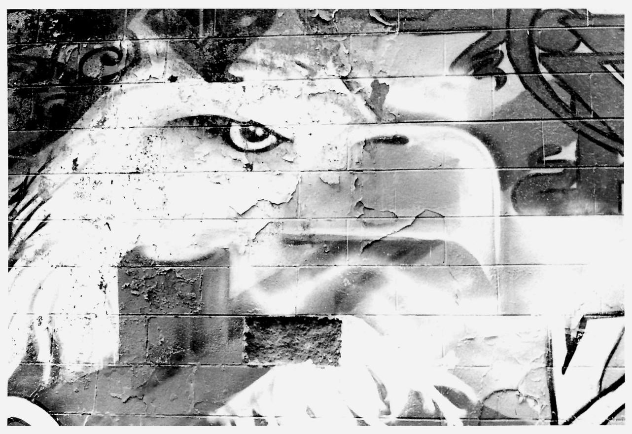 Eagle Graffiti