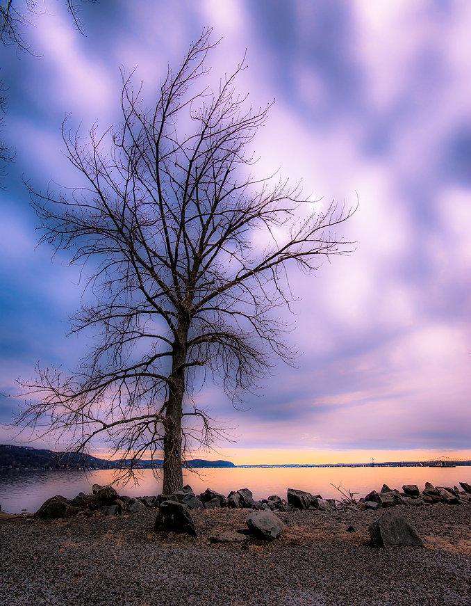 Piermont Tree