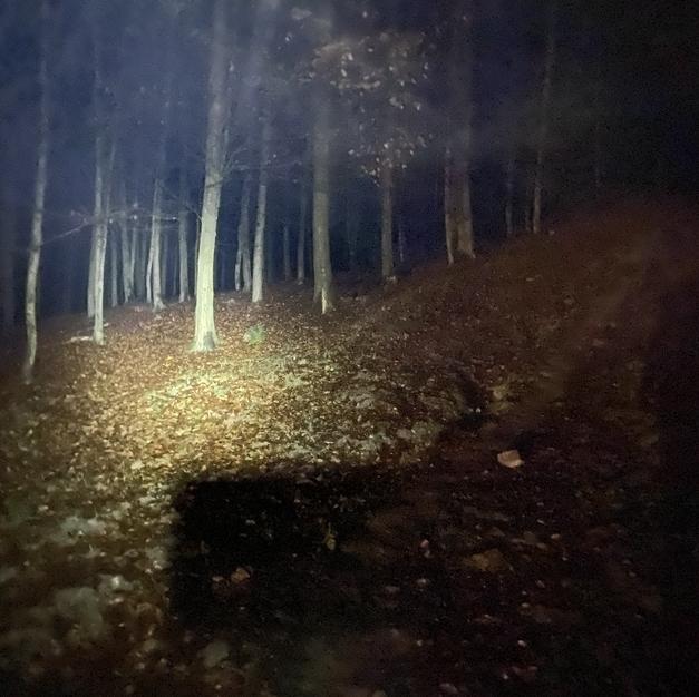 Strašidelný les v noci