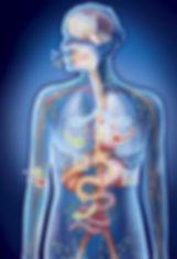 Endobiogeny body system