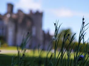 Méabh and Sean 'Tie The Knot' in Ardgillan Castle
