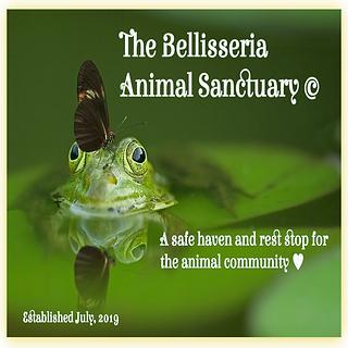 Bellisseria Animal Sanctuary  Poster.png
