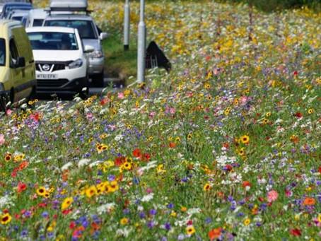 Vadvirágokat ültetnek a Bem utcai körforgalmi csomópontba