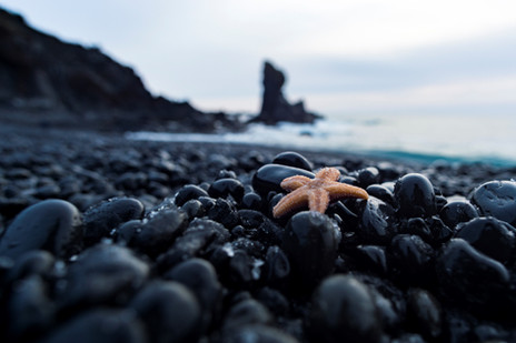 Black Beaches and Starfish