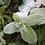Thumbnail: Winter Storm Peppermint Lotion Bar Stick