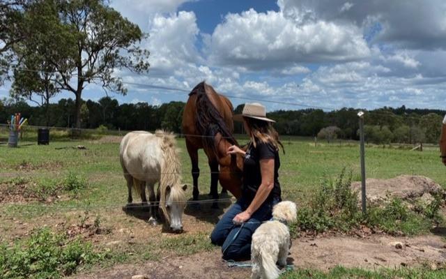Horses Healing Hearts