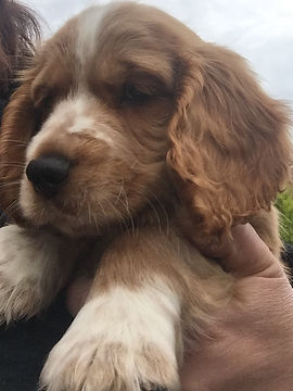 puppy Hugo.jpg