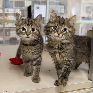 Friends of kittens.jpg