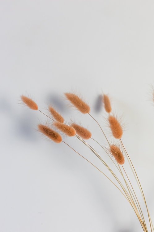 Letterbox Dried bunch of Bunny Tails Browns