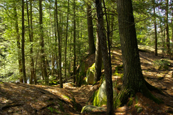 4 Waterfall Hiking Trails