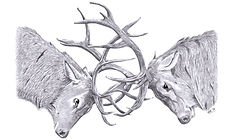 Rutting Stags graphite drawing